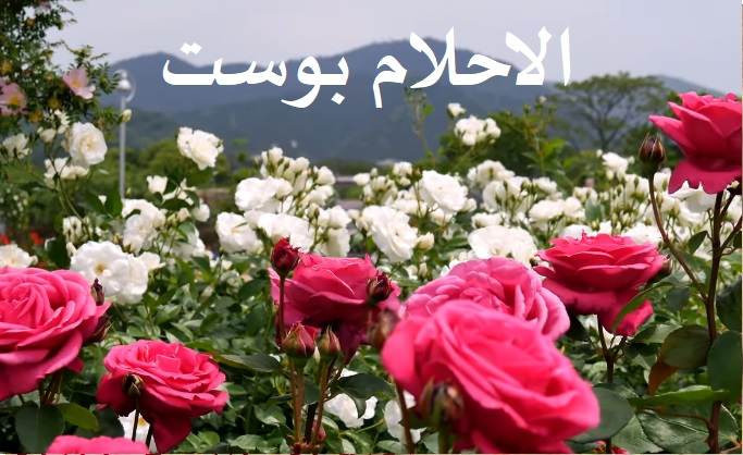 تفسير رؤية الورد والزهور في المنام للعزباء وللمتزوجة وللحامل وللرجل الاحلام بوست
