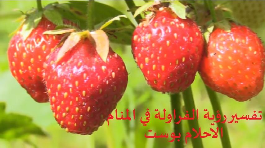 حلم الفراولة