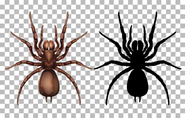 العنكبوت في المنام وتفسير 15